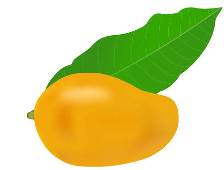 vector afbeelding van een mango vruchten- en -blad