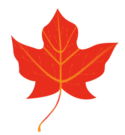vector  illustration of a single maple leaf Stock Vector - 4244110