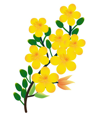 oriental vector: vector  illustration of a ochna integerrima branch, the flowers of traditional  Vietnamese new year