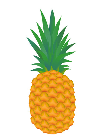 vector  illustration of a pineapple fruit isolated on white
