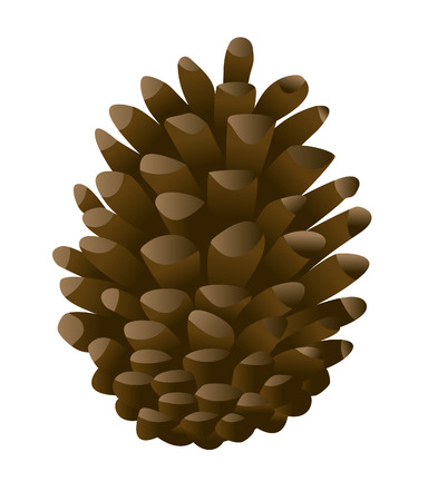 pine cone: vector  illustration of a single pine cone