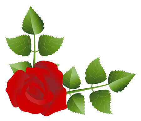 vector  illustration of a red flower isolated on white
