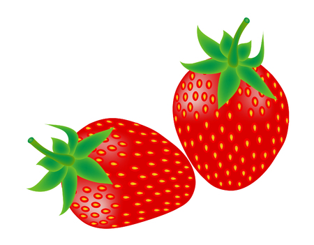 vector  illustration of two trawberry fruits on white Vector