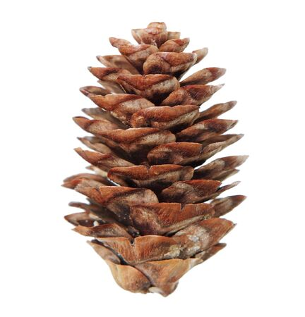 Single pine cone isolated on white background Stock Photo - 4243823