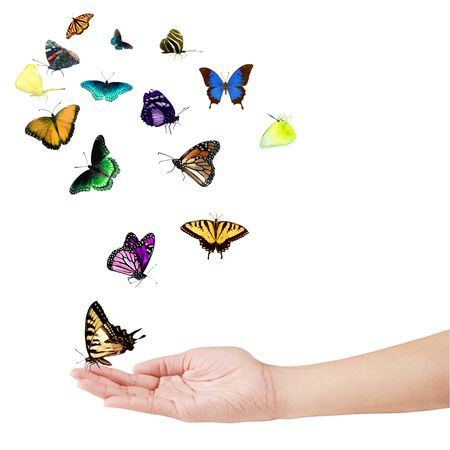 Hand and colorful butterflies isolated on white Stock Photo - 4244090
