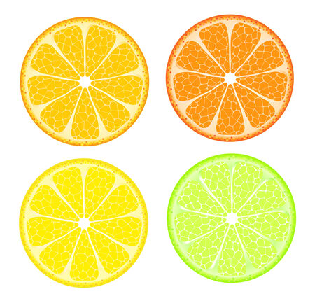 vector of 4 citrus slices isolated on white Çizim