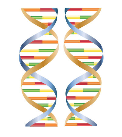 researches: vector of DNA isolated on white Illustration