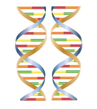 vector of DNA isolated on white Ilustração