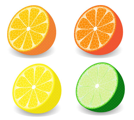 vector  illustration of a set of four kind of citrus fruits Çizim