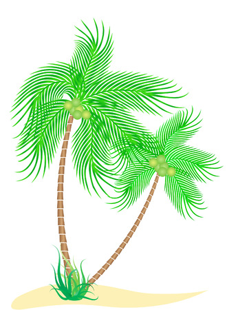 vector illustration of two coconut trees isolated on white