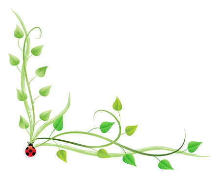 protecting: vector illustration of pothos on vines isolated