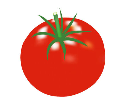 vector raster background: vector illustration of a single tomato isolated on white