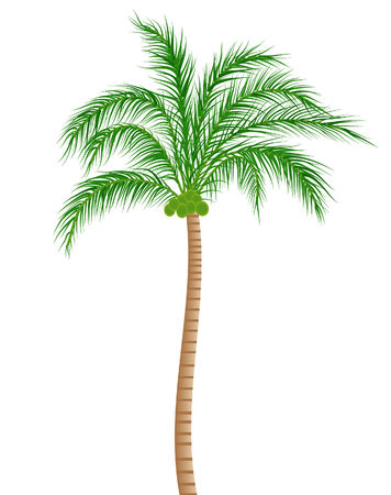 vector illustratie van een kokosnoot boom op wit wordt geïsoleerd Stock Illustratie