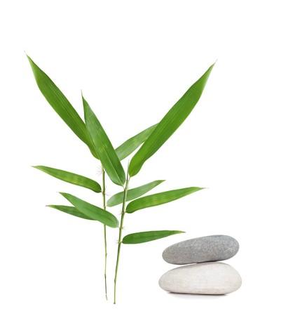 Fresh bamboo leaves isolated on white background photo