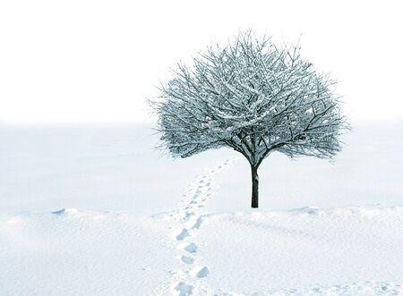 huellas de pies: �rbol de cockspur solo en el campo de nieve con huellas