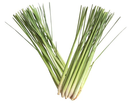 Fresh lemongrass stems isolated on white background