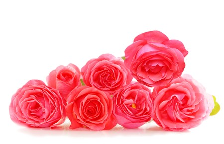 pinks: Fresh pink roses isolated on white background Stock Photo
