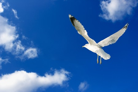 Single seagull flying against blue cloudy sky Stock Photo - 4246887