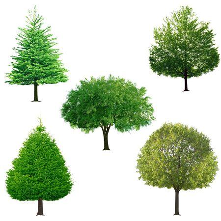 白い背景上に分離されて新鮮な木のコレクション