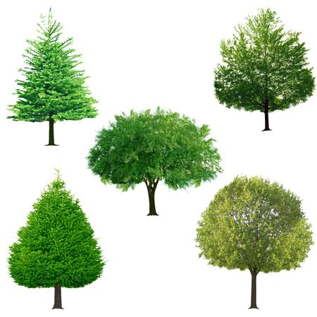 Fresh tree collection isolated on white background