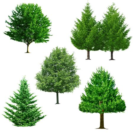 Set of trees isolated on white background photo
