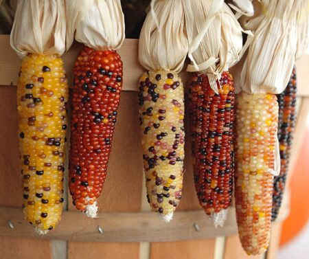Six indian colorful corns for holidays background photo