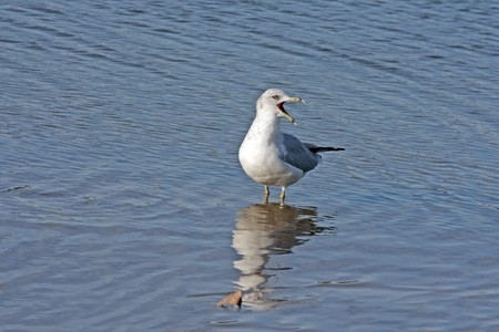 Single seagull bird standing on the shore Stock Photo - 4247882
