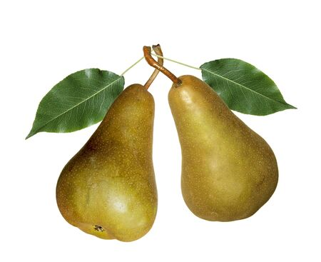 Two fresh pears isolated on white background
