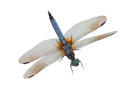 Elegant Blue dragonfly isolated on white background Imagens