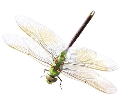 single green dragonfly isolated on white background