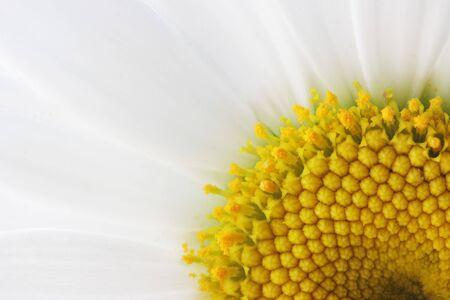 The core of white daisy Reklamní fotografie