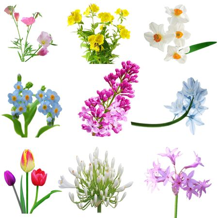 Flowers collection isolated on white background Stok Fotoğraf