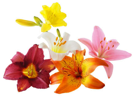 Lily and daylily flowers isolated on white photo