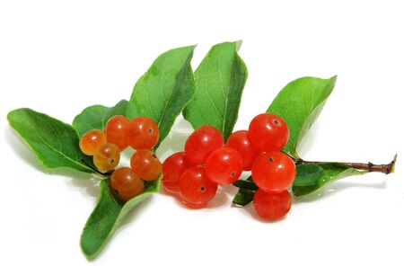 Small orange honeysuckle wild berry fruits and leaves isolated on white photo