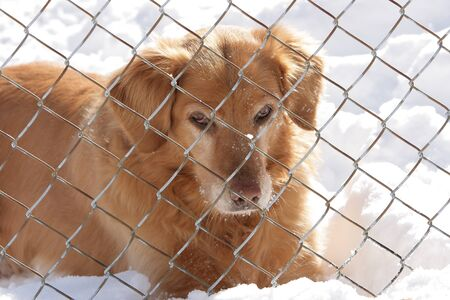 molosse: Alone dog behind the fence in the snow Stock Photo