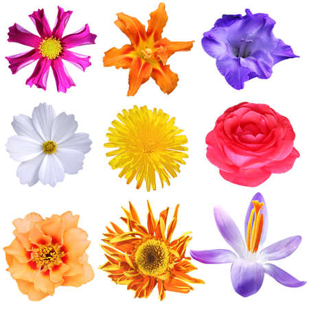 Set of colorful flower heads isolated on white photo