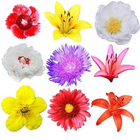 Set of colorful flowers photo