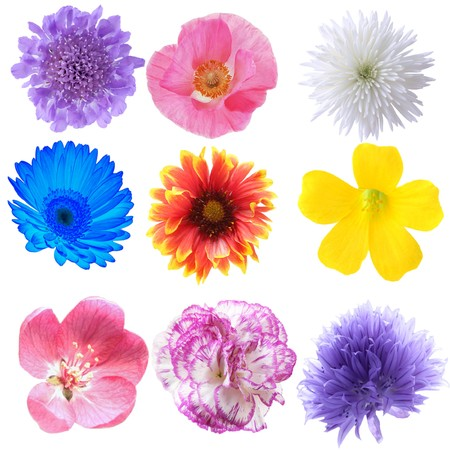 Flowers collection isolated on white background photo