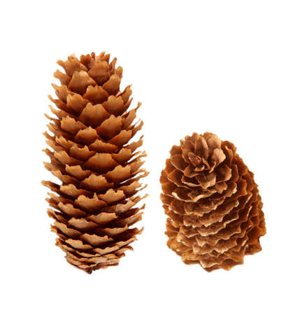 Two pinecones isolated on white