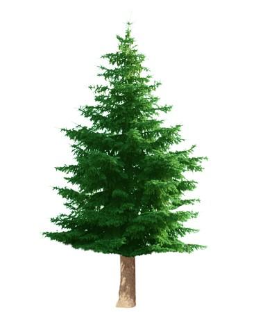 松の木を白で隔離されます。