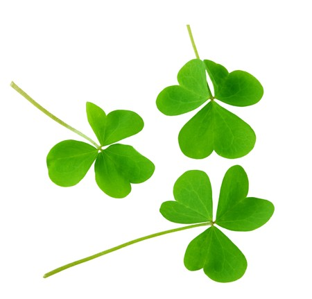 Three green shamrock leaves isolated on white background Stock Photo - 4281622
