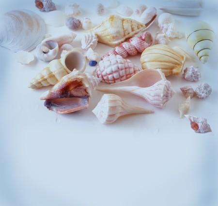 Seashells on blue background Stock Photo - 4268429