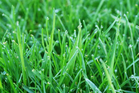 Grass and dews