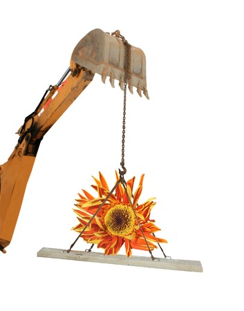 Grave liner lift with wilted gerbera flower
