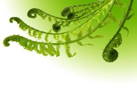 Curly fern branches on gradient green background photo