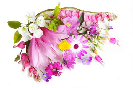 Colorful multiple flowers isolated on white background photo