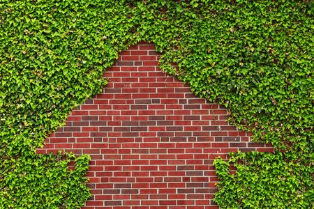 ivy wall: Brick wall covered by ivy leaves left a arrow shape