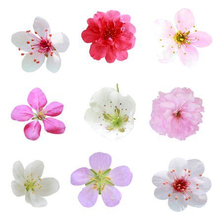 flor de durazno: Conjunto de frutas flor aislado en el fondo blanco