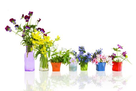 early summer: Colorful early summer flowers in small containers Stock Photo