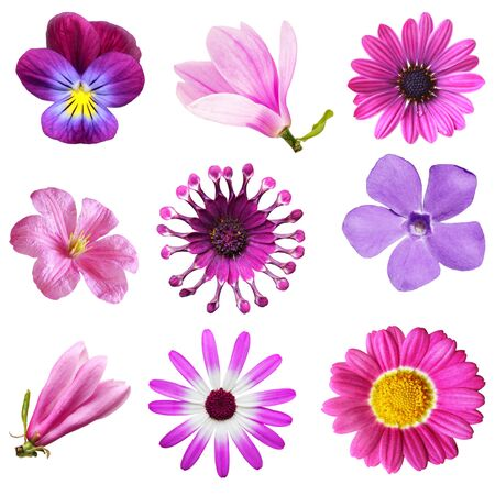 early summer: Set of early summer flowers isolated on white background Stock Photo